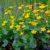 O uprawie roślin cz. 4