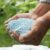 Użycie, wybór i wartość nawozów fosforowych