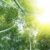 Trwałość życia roślin